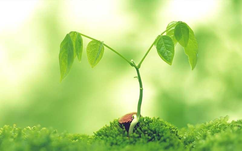ปลูกต้นไม้ทำให้อากาศบริสุทธิ์จริงหรือไม่