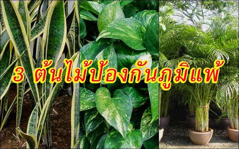 แนะนำต้นไม้ป้องกันภูมิแพ้ ที่ช่วยเปลี่ยนอากาศเสียในบ้านให้บริสุทธิ์ขึ้น