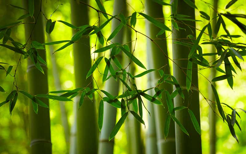 If_bamboo