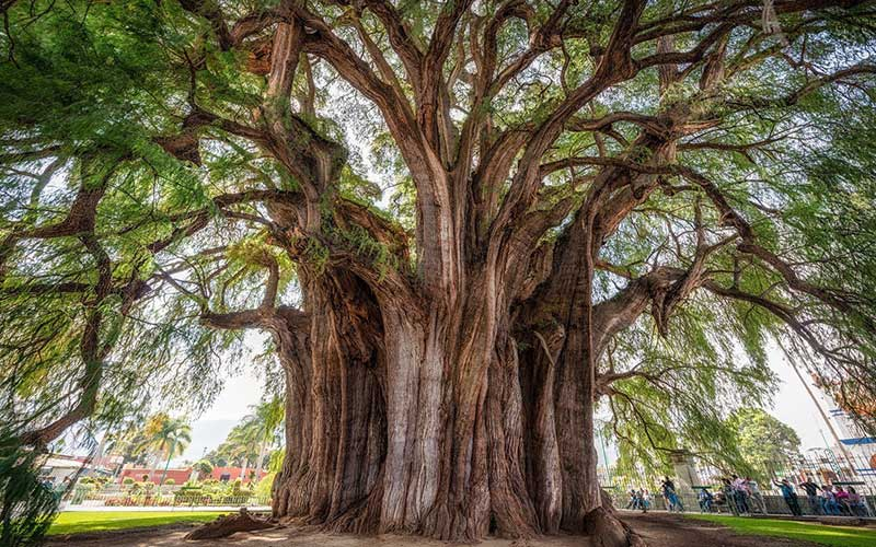 Off_every_exit_Trees_trove_custody-