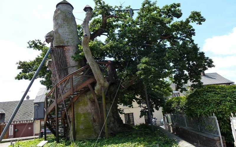 Sacred_Tree_ChapelOakofAllouville