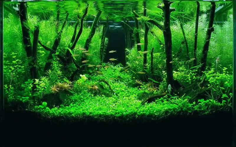 การเลี้ยงต้นไม้น้ำสวยงาม ไม่มีเวลาก็เลี้ยงได้