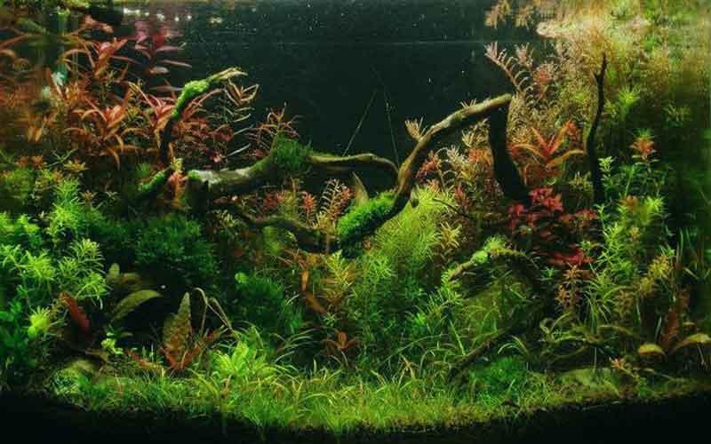news-site-Raising-beautiful-water-plants